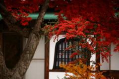 色づく山寺にて