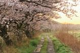 春~君恋し~