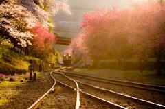 春と光とトキメキと・・・