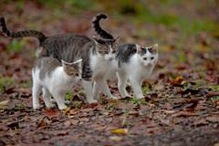 子猫の社会見学♪