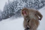 降りしきる雪の中で・・・