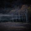 森の精霊たち