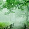 朝霧に誘われて・・・