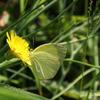 蝶々#01