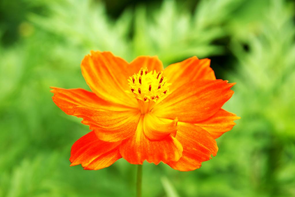 綺麗なオレンジ