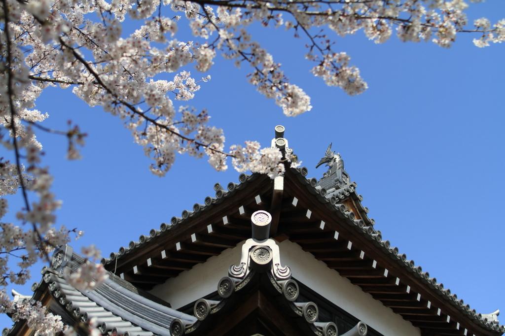 郡山城と桜