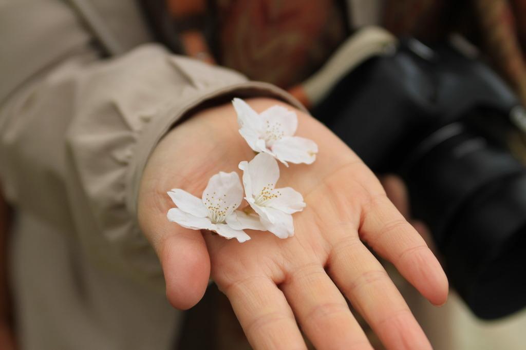 手のひらの花びら。