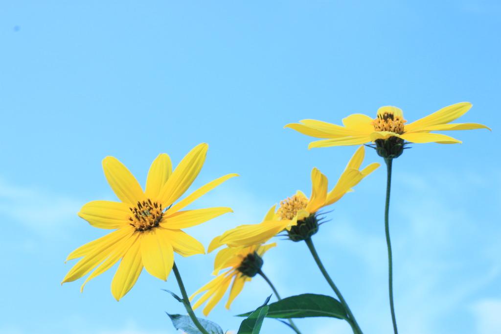 黄色と青。