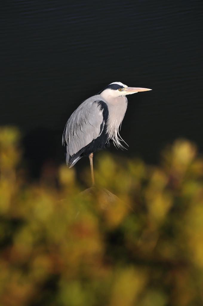 今年の撮り初めは、鳥!