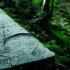 苔生す階段と蛇