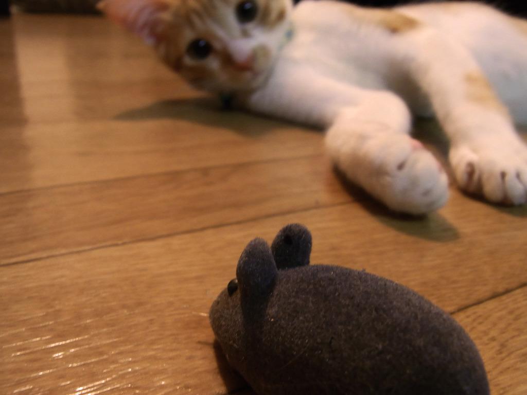 ネズミの運命は・・