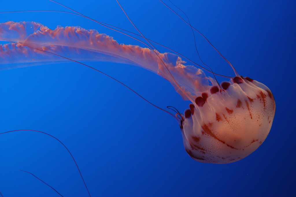 Sexy jelly fish