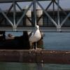 Bird looking at me