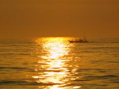 黄金のさざ波