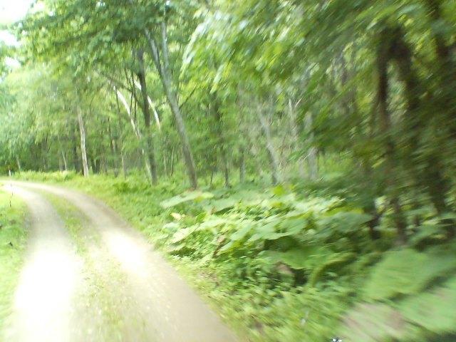 - 森を駆ける -