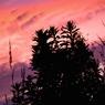 CANON Canon EOS Kiss X2で撮影した風景(YURA YURA)の写真(画像)