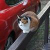 オトモダチのネコ「ミケちゃん」02