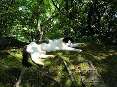 木もれ日の中の猫