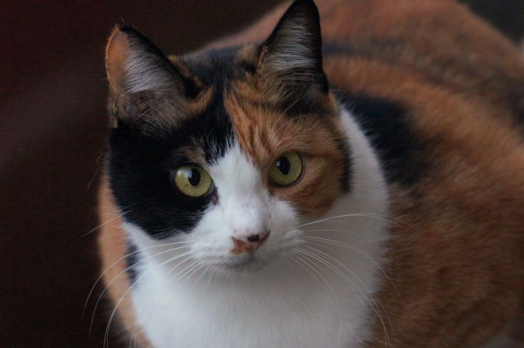オトモダチのネコ「ミケちゃん」01