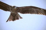 翼とクチバシと眼