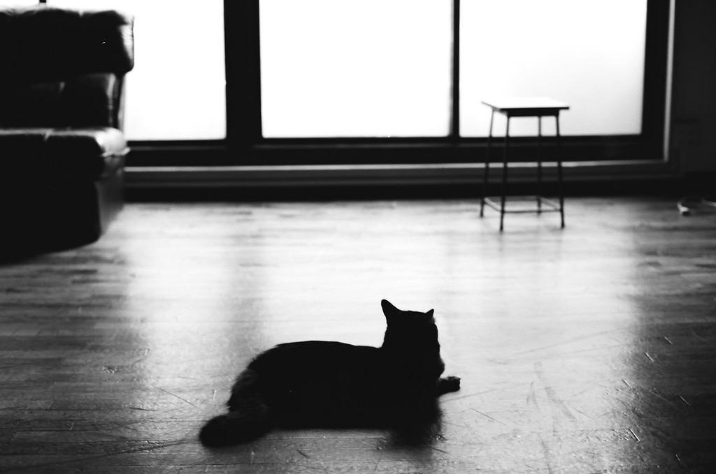 猫と光(M)