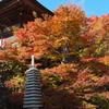 両子寺の紅葉1