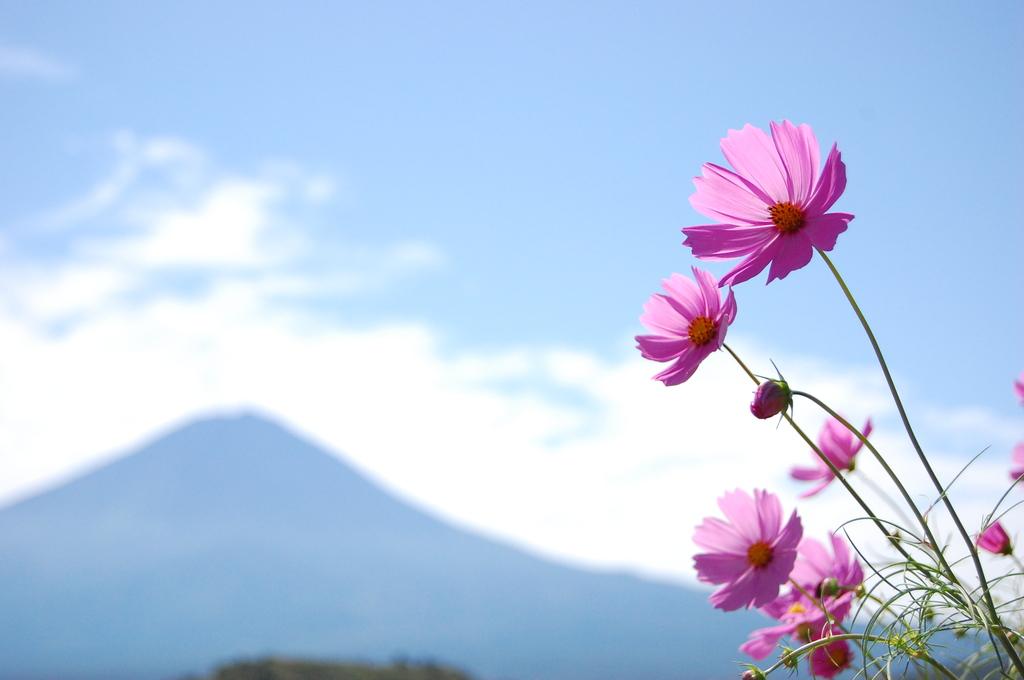 富士とコスモス