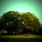 APPLE iPhoneで撮影した風景(この木何の木?)の写真(画像)