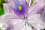きらめく薄紫