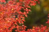 紅葉亭の撮った紅葉