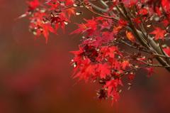 紅葉亭の紅葉