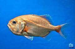 aquarium-3