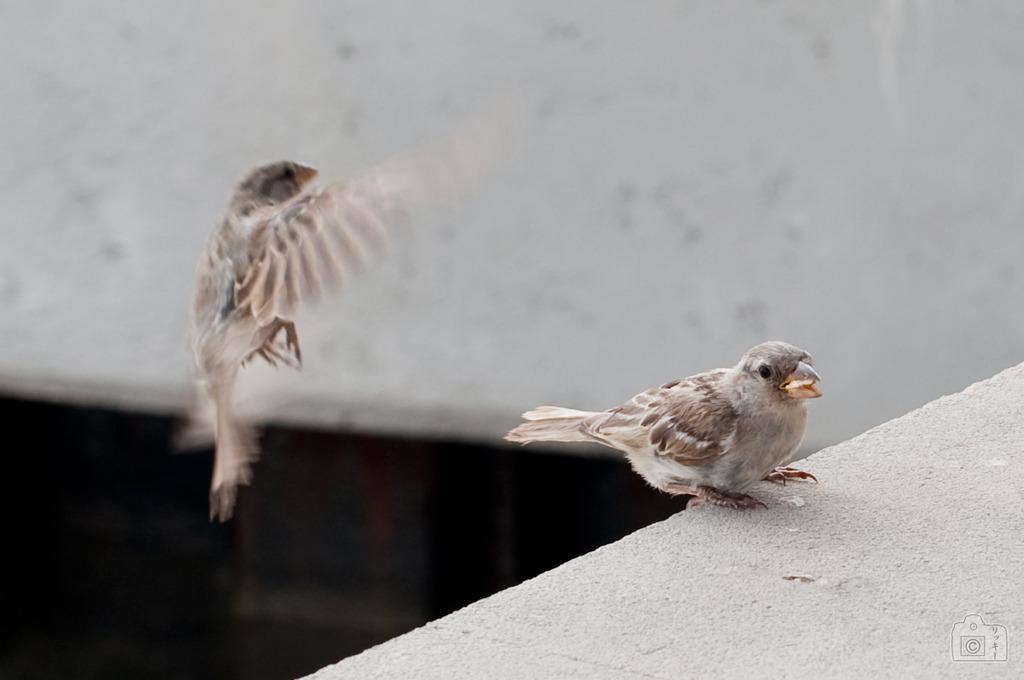 flying-bird