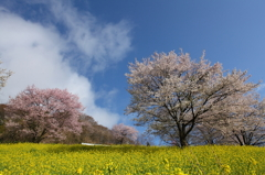 安曇野の春
