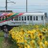 ヒマワリ電車