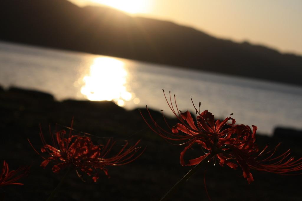 陽の赤と華の紅