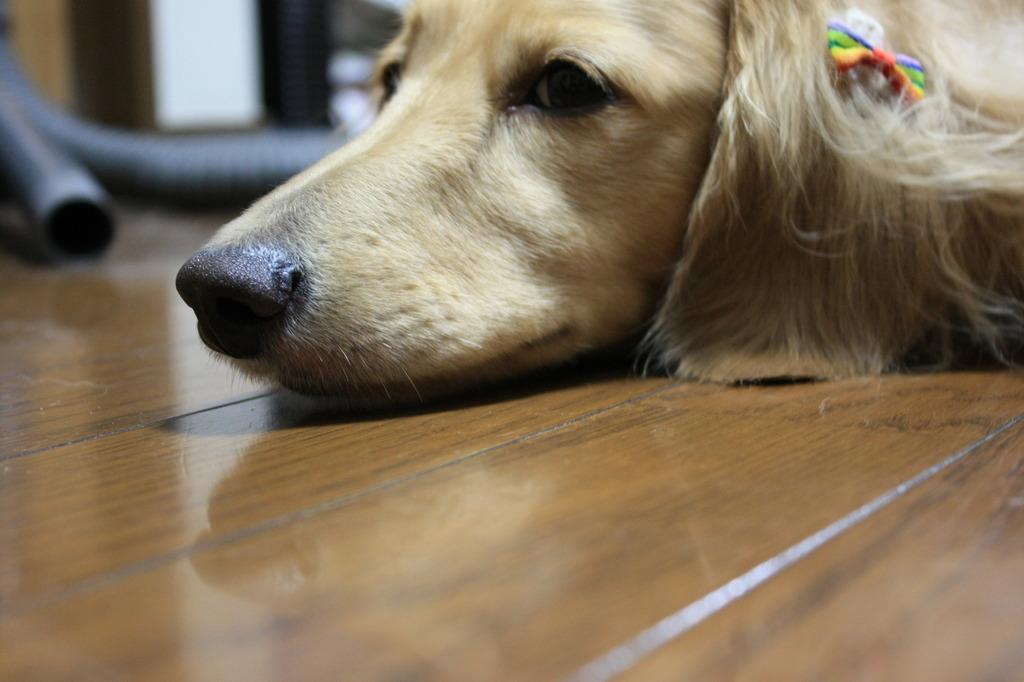 オッサン犬