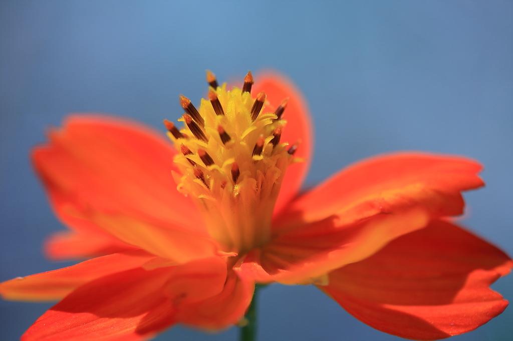 お花 その1