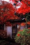 錦秋の茶室