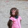 ぼーっとする猿
