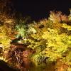 夜景 紅葉1