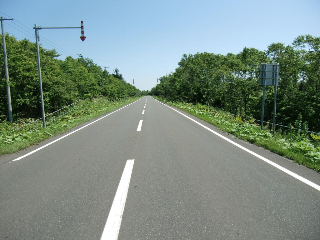 アスファルト道路と並木