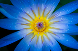 水と太陽の花
