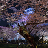 鶴ヶ城に桜舞う