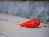 紅の堕天使
