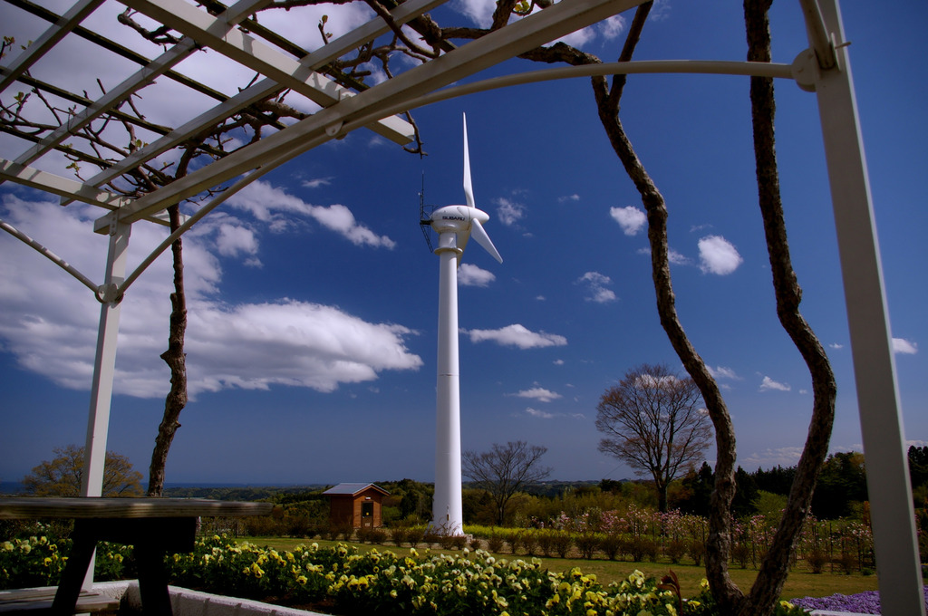 風車と藤棚