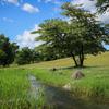 小川のある風景