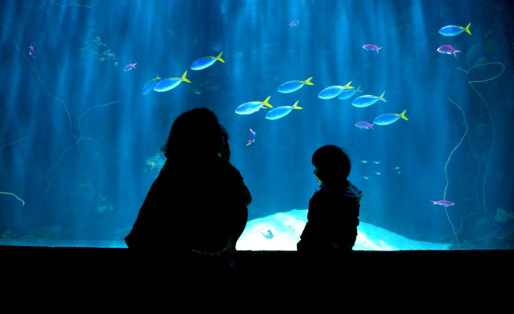 水族館 ~光のシャワー~