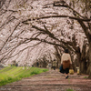 Sakura walk ~爛漫~