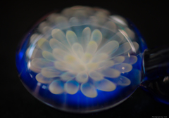 ガラスの中に咲きし花
